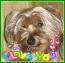 avatar_maximus23
